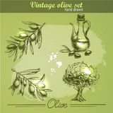 Vintage hand drawn set of olive branch tree and bottle Stock Images