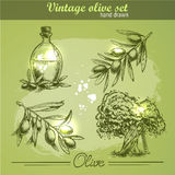 Vintage hand drawn set of olive branch tree and bottle Stock Image