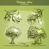Vintage hand drawn set of olive branch tree and bottle. Sketch style. Royalty Free Stock Image