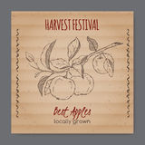 Vintage harvest festival label with apple branch. Placed on original cardboard texture. Includes hand drawn elements Royalty Free Stock Image