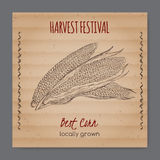 Vintage harvest festival label with corn cobs Stock Photography