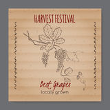 Vintage harvest festival label with grapevine. Placed on original cardboard texture. Includes hand drawn elements Stock Photography