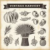 Vintage harvest set Stock Image