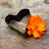 Vintage heart. With orange flower Royalty Free Stock Photos