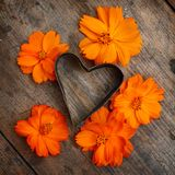 Vintage heart with flowers. Vintage heart with orange flowers Stock Photos