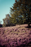 Vintage heathland  Stock Images