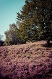 Vintage heathland  Stock Images