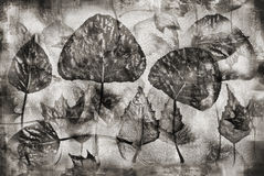 Vintage herbarium background Royalty Free Stock Photo