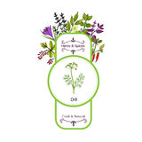 Vintage herbs and spices label collection. Dill. Hand drawn vector illustration Stock Image
