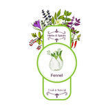 Vintage herbs and spices label collection. Fennel. Hand drawn vector illustration Stock Photography