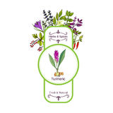 Vintage herbs and spices label collection. White turmeric Royalty Free Stock Photography