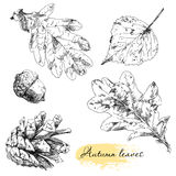 Vintage highly detailed hand drawn leaves Stock Photography