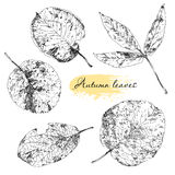 Vintage highly detailed hand drawn leaves Royalty Free Stock Images
