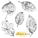 Vintage highly detailed hand drawn leaves Stock Images