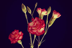 Vintage hipster red flower bouquet background Royalty Free Stock Photo