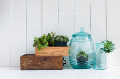Vintage home decor. Houseplants, green succulents, old wooden boxes and vintage blue glass bottles on white wooden board, cozy home interior Stock Photography
