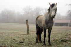 Vintage horse Stock Image