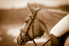 Vintage horse head Stock Photo