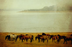 Vintage horse picture Stock Images
