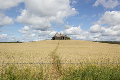 Vintage house in a field. Old vintage house sitting in a wheat field with a blue sky and fluffy clouds Stock Photography