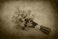 Vintage hyacinth on grunge background Stock Photo