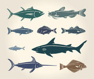 Vintage illustration of fish Royalty Free Stock Image