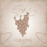 Vintage illustration of grapes Stock Images