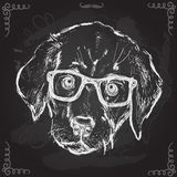 Vintage illustration of hipster puppy with glasses Stock Photography
