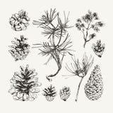 Ink drawn pine cones Stock Photo