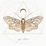Vintage illustration with mystic butterfly. Vintage style illustration with dead`s head butterfly, mystic illustration with beautiful sullen moth Royalty Free Stock Photo