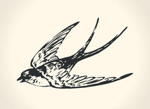 Vintage illustration of swallow Stock Photography