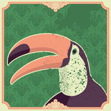 Vintage illustration with toucan. Royalty Free Stock Photography