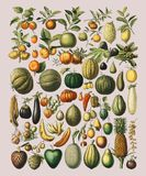 A vintage illustration of a wide variety of fruits and vegetables. From the book, Nouveau Larousse Illustre 1898, by Larousse, Pierre, Augé and Claude stock illustration