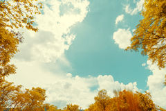 Vintage image of Autumn leaves on the sky Stock Images
