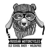 Vintage Image of Bear for t-shirt design for motorcycle, bike, motorbike, scooter club, aero club. Hand drawn picture Stock Photography