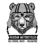 Vintage Image of BEAR for t-shirt design for motorcycle, bike, motorbike, scooter club, aero club. Hand drawn picture Royalty Free Stock Images