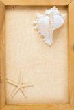 Vintage image of conch shell and starfish Royalty Free Stock Photo