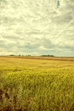 Vintage image cultivated fields. Royalty Free Stock Photography