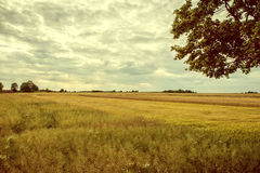 Vintage image cultivated fields. Stock Images
