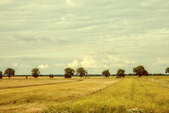 Vintage image cultivated fields. Stock Photos