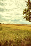 Vintage image cultivated fields. Royalty Free Stock Photo