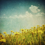 Vintage image of dandelion field Royalty Free Stock Photography