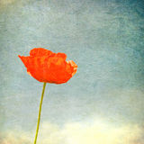 Vintage image of poppy Royalty Free Stock Photos
