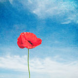 Vintage image of poppy Royalty Free Stock Photo