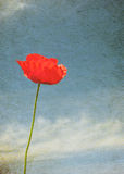 Vintage image of poppy royalty free stock photos