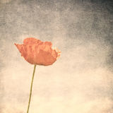 Vintage image of poppy Royalty Free Stock Images