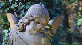 Vintage image of a sad angel on a cemetery against the backgrou Royalty Free Stock Photo