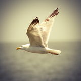 Vintage image of seagull in flight Stock Photography