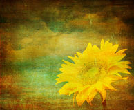 Vintage image of sunflower Stock Images