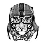 Vintage Image TIGER for t-shirt design for motorcycle, bike, motorbike, scooter club, aero club. Hand drawn image Stock Photos